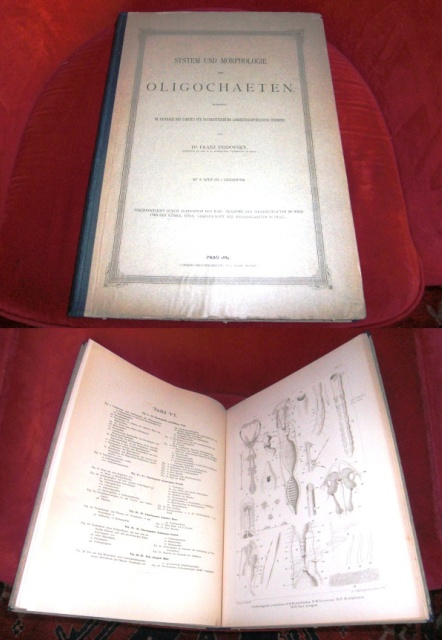Franz Vejdovsky. System Und Morphologie Der Oligochaeten.